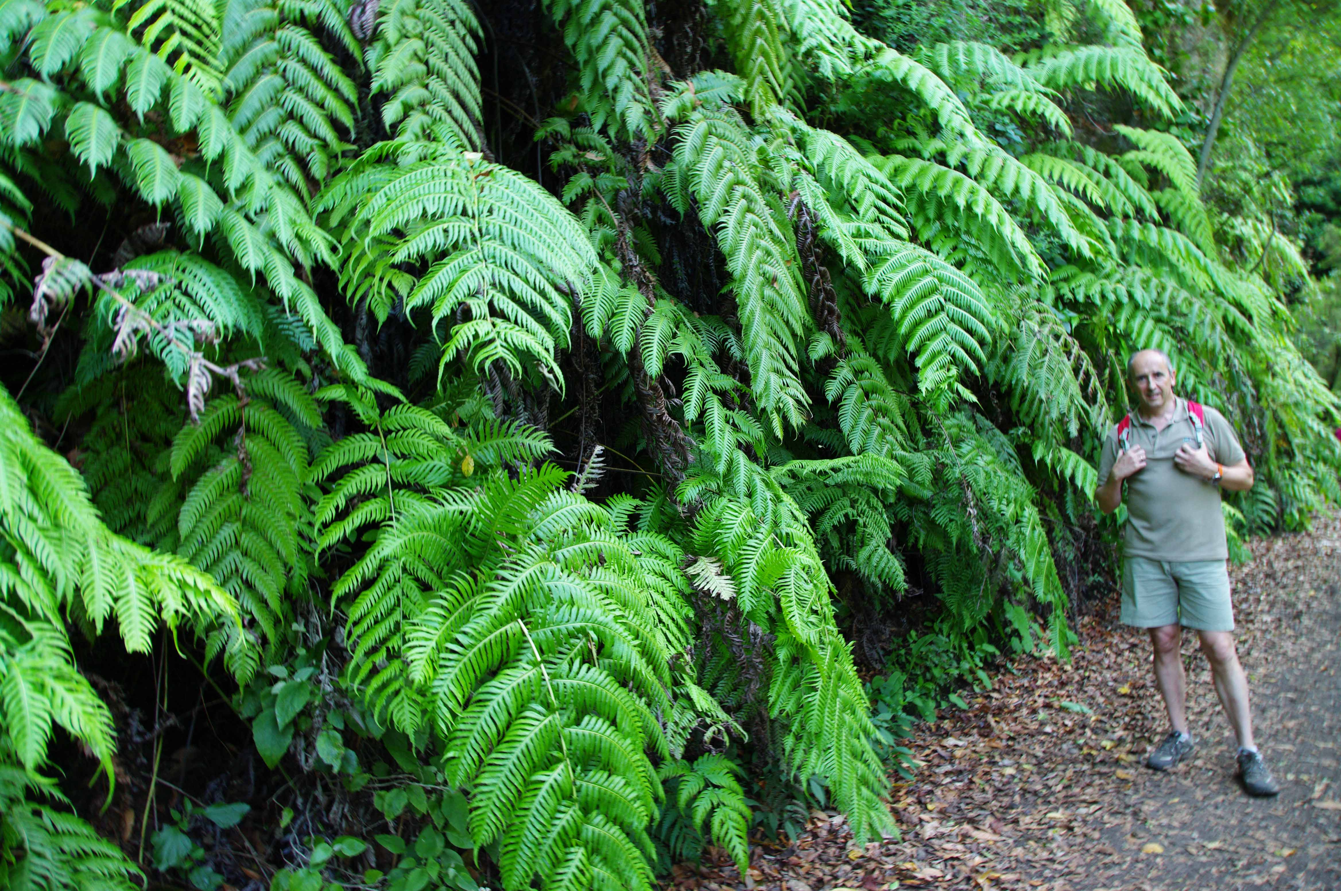 En santa cruz de la palma blog de josu erkoreka for Vegetacion ornamental